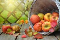 Tag des Apfels